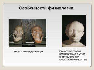 Особенности физиологии Черепа неандертальцев Скульптура ребёнка-неандертальца