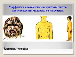 Атавизмы человека Морфолого-анатомические доказательства происхождения челове