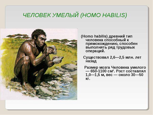 ЧЕЛОВЕК УМЕЛЫЙ (HOMO HABILIS) (Homo habilis) древний тип человека способный к...