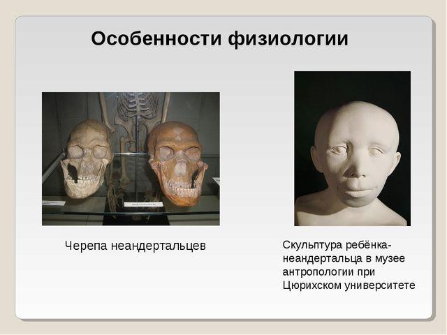 Особенности физиологии Черепа неандертальцев Скульптура ребёнка-неандертальца...