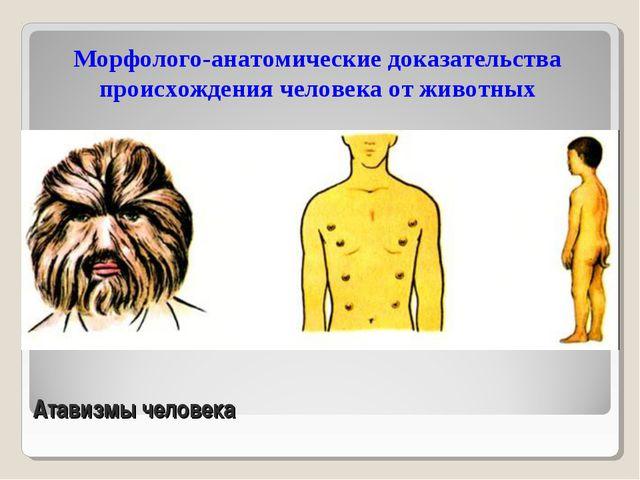 Атавизмы человека Морфолого-анатомические доказательства происхождения челове...