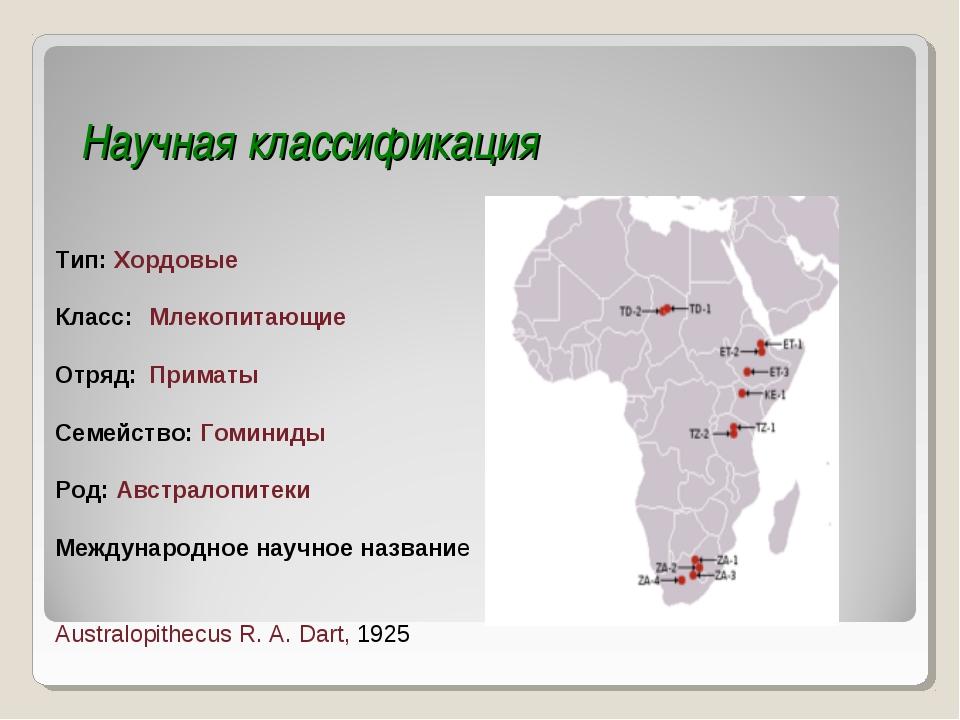 Научная классификация Тип: Хордовые Класс: Млекопитающие Отряд: Приматы Сем...