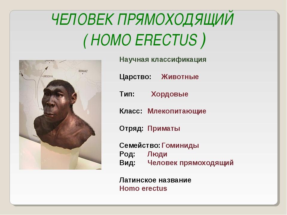 ЧЕЛОВЕК ПРЯМОХОДЯЩИЙ ( HOMO ERECTUS ) Научная классификация Царство:Животные...