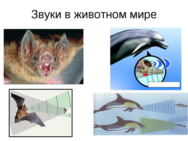 Звуки в животном мире