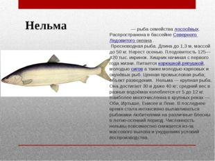 Нельма Не́льма — рыба семействалососёвых. Распространена в бассейне Северног