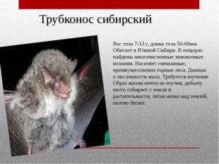 Трубконос сибирский Вес тела 7-13 г, длина тела 50-60мм. Обитает в Южной Сиби