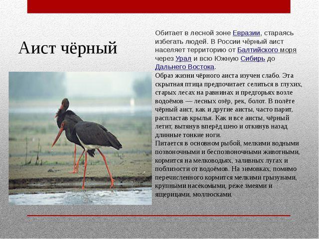 Аист чёрный Обитает в лесной зонеЕвразии, стараясь избегать людей. В России...
