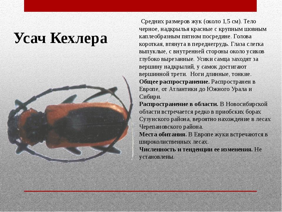 Усач Кехлера Средних размеров жук (около 1,5 см). Тело черное, надкрылья кр...