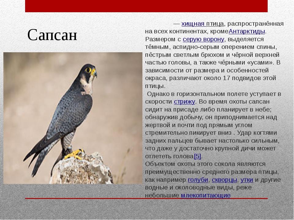 Сапсан Сапса́н —хищная птица, распространённая на всех континентах, кромеАнт...
