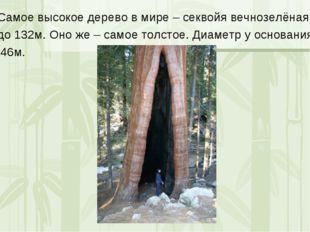 Самое высокое дерево в мире – секвойя вечнозелёная, до 132м. Оно же – самое т