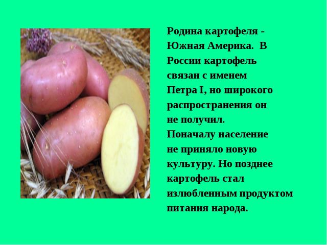 Родина картофеля - Южная Америка. В России картофель связан с именем Петра I,...