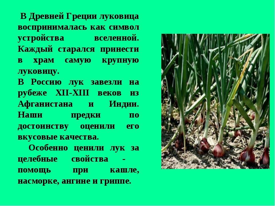 В Древней Греции луковица воспринималась как символ устройства вселенной. Ка...