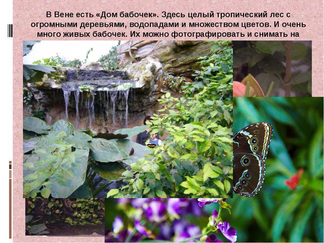 В Вене есть «Дом бабочек». Здесь целый тропический лес с огромными деревьями,...