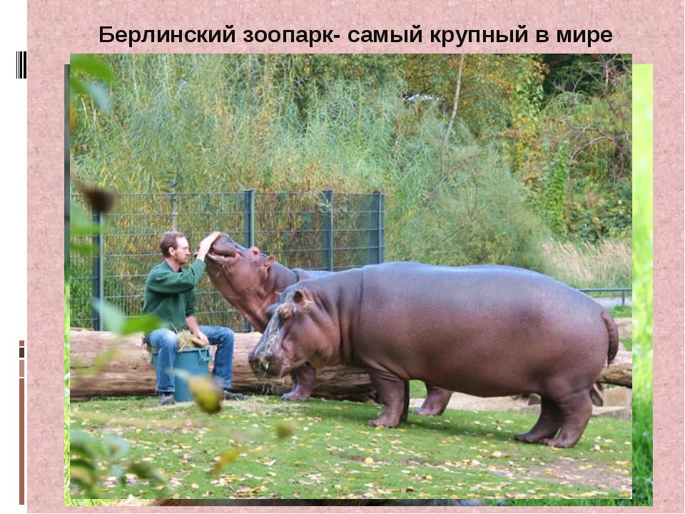 Берлинский зоопарк- самый крупный в мире
