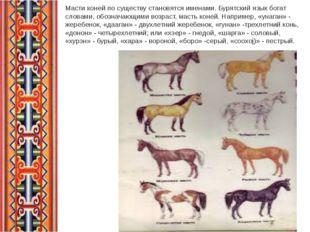 Масти коней по существу становятся именами. Бурятский язык богат словами, обо