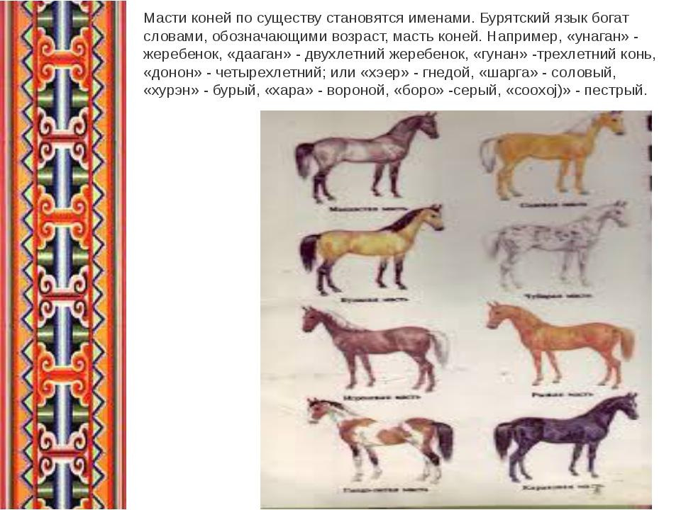 Масти коней по существу становятся именами. Бурятский язык богат словами, обо...