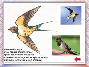 Полагают, что на способность сизых голубей возвращаться к местам своих гнездо