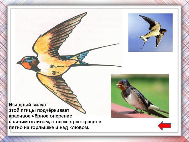 Полагают, что на способность сизых голубей возвращаться к местам своих гнездо...