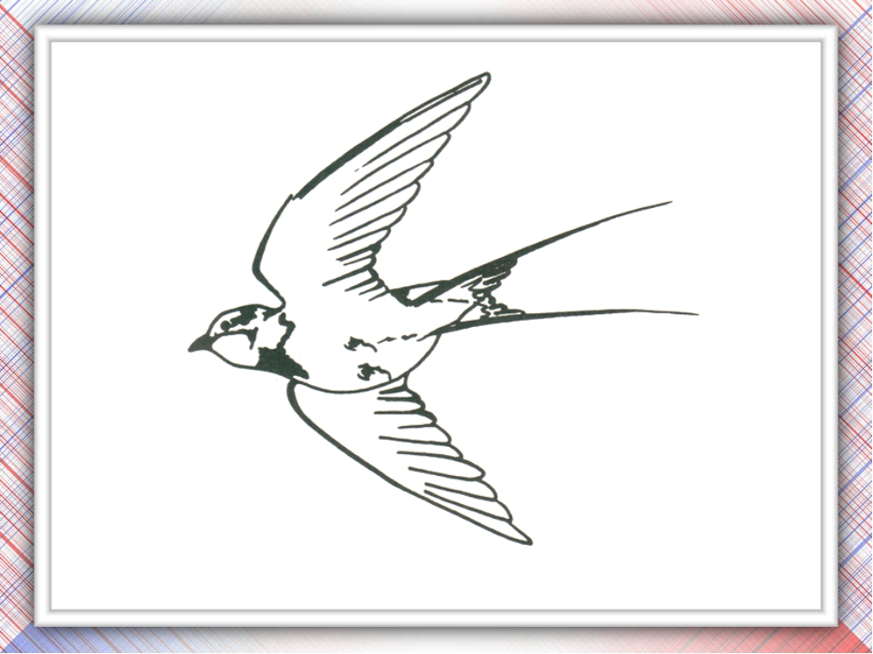 Изящный силуэт этой птицы подчёркивает красивое чёрное оперение с синим отлив...