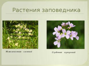 Растения заповедника Сердечник пурпуровый Мелколепестник сложный User: