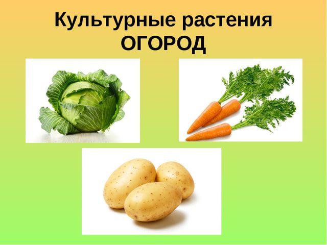 Культурные растения ОГОРОД