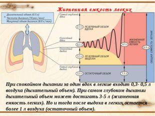При спокойном дыхании за один вдох в легкие входит 0,3- 0,5 л воздуха (дыхате