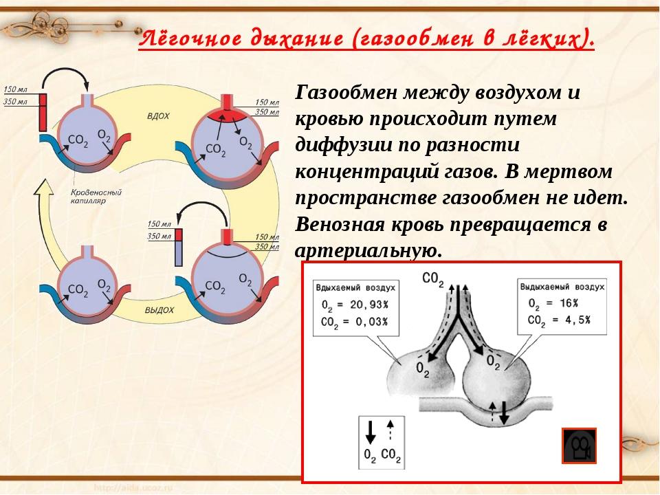 Лёгочное дыхание (газообмен в лёгких). Газообмен между воздухом и кровью прои...