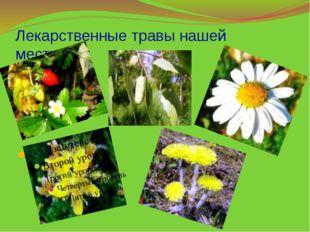 Лекарственные травы нашей местности