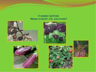 К каким группам Миша отнесёт эти растения?