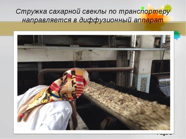 Стружка сахарной свеклы по транспортеру направляется в диффузионный аппарат P...
