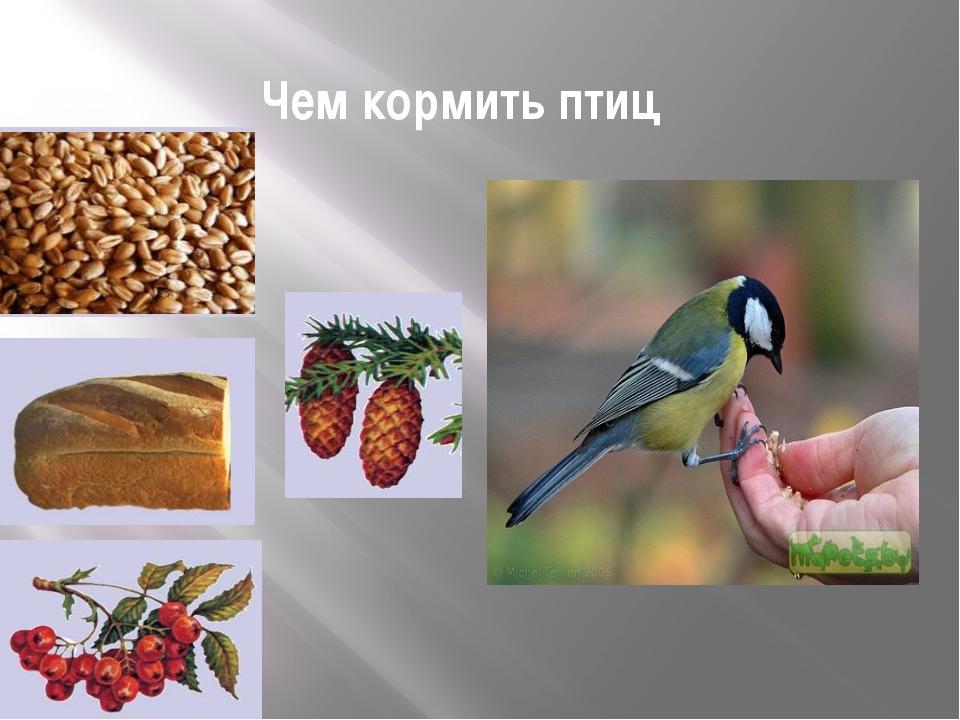 Чем кормить птиц .