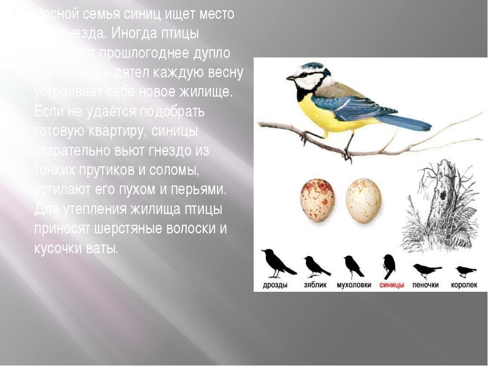Весной семья синиц ищет место для гнезда. Иногда птицы занимают прошлогоднее...