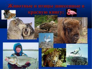 Животные и птицы занесенные в красную книгу: