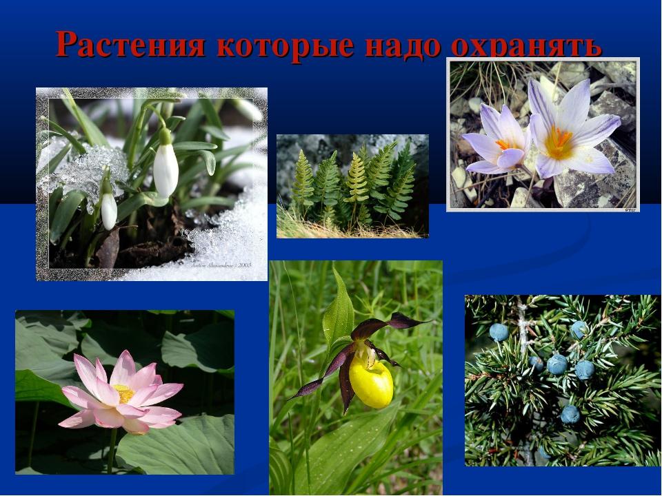 Растения которые надо охранять