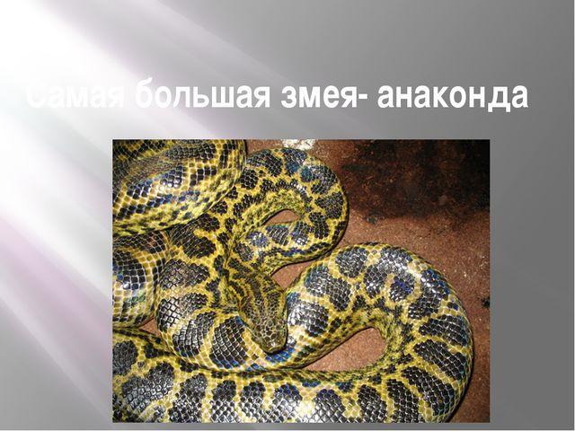Самая большая змея- анаконда