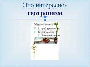 Это интересно-геотропизм Кузнецова Т.В. Урок 19/11. Сила. Явление тяготения.