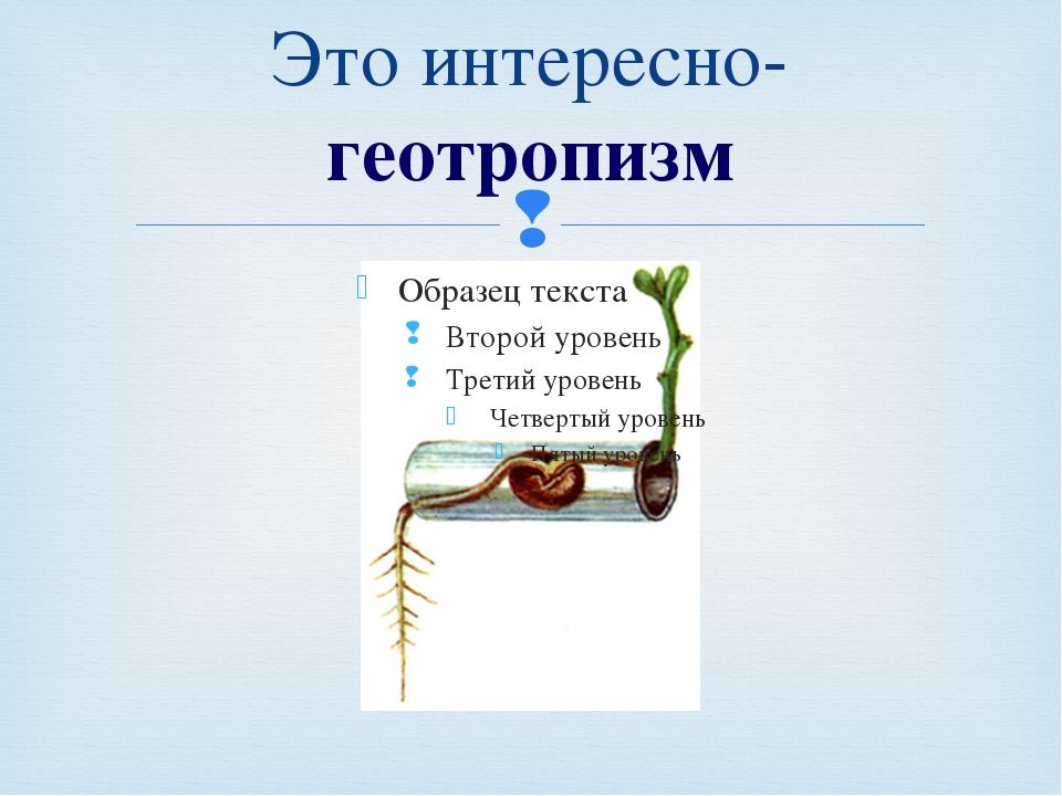 Это интересно-геотропизм Кузнецова Т.В. Урок 19/11. Сила. Явление тяготения....