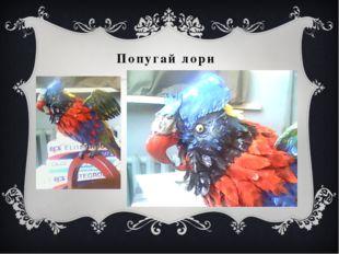 Попугай лори