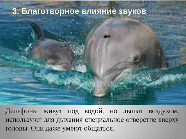 Дельфины живут под водой, но дышат воздухом, используют для дыхания специальн...