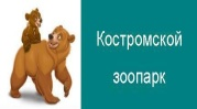 G:\kostrzoo (1).jpg