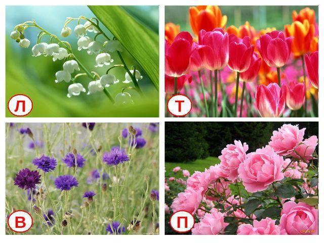 Л Т В П Кто знает названия этих цветов?