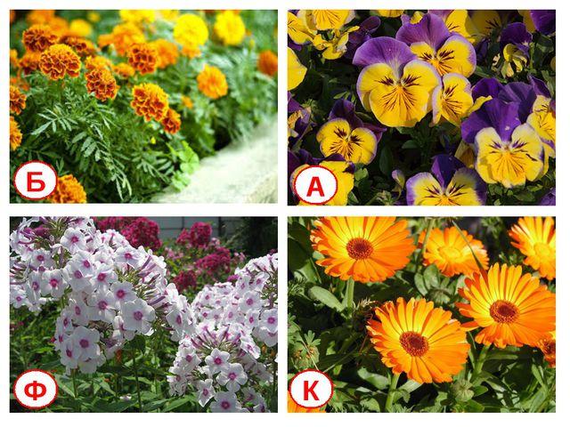 Б А Ф К Какие цветы цвели на нашей школьной клумбе летом и осенью?
