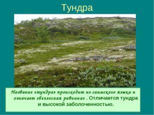 Тундра Название «тундра» происходит из саамского языка и означает «безлесная