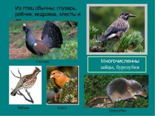 Из птиц обычны: глухарь, рябчик, кедровка, клесты и др. Многочисленны зайцы