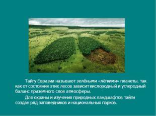 Тайгу Евразии называют зелёными «лёгкими» планеты, так как от состояния эти
