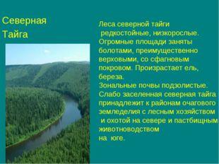 Северная Тайга Леса северной тайги редкостойные, низкорослые. Огромные площад