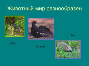 Животный мир разнообразен Дятел Тетерев Еж