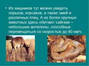 Из хищников тут можно увидеть хорьков, корсаков, а также змей и различных пти