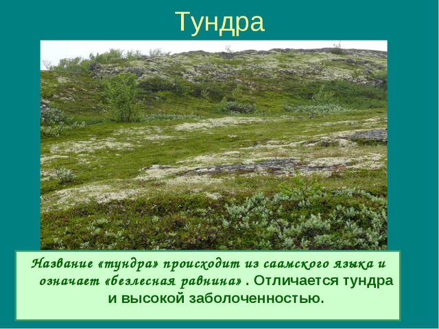 Тундра Название «тундра» происходит из саамского языка и означает «безлесная...