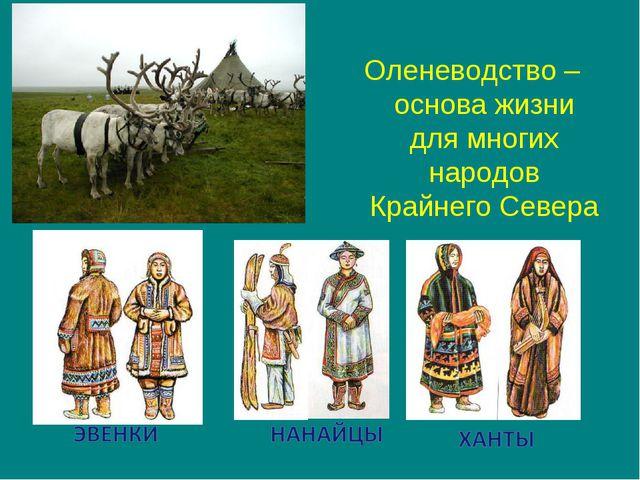Оленеводство – основа жизни для многих народов Крайнего Севера